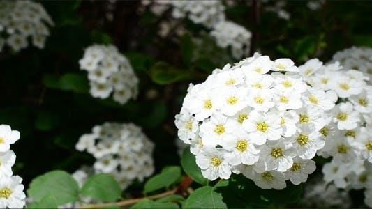 Thumbnail for Flowers 14