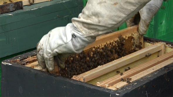 Honey Bees 3