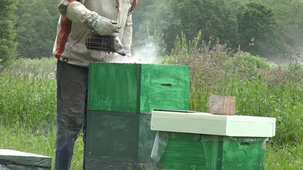 Thumbnail for Honey Bees 10