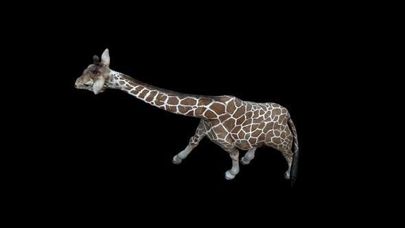 Thumbnail for Giraffe Walk Top