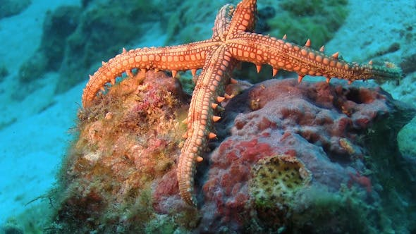 Thumbnail for Tropical Starfish on Vibrant Coral Reef