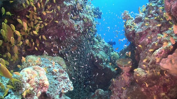 Cover Image for Colorful Fish on Vibrant Coral Reef