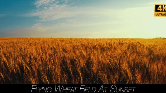 Cover Image for Flying Wheat Field At Sunset 2