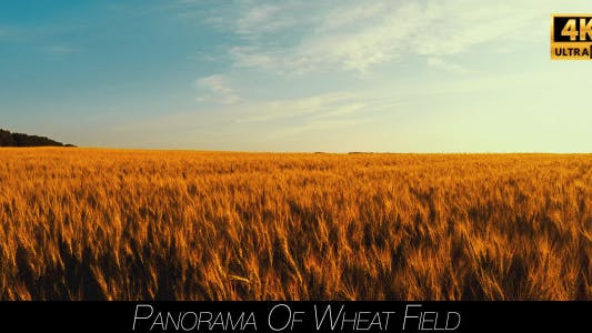 Thumbnail for Panorama Of Wheat Field