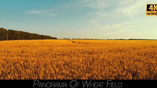 Thumbnail for Panorama Of Wheat Field 2