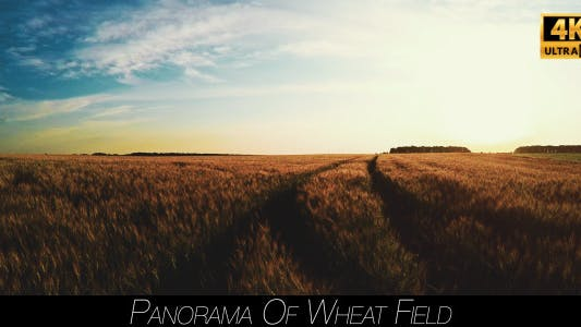 Thumbnail for Panorama Of Wheat Field 4