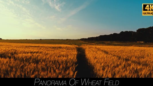 Thumbnail for Panorama Of Wheat Field 5