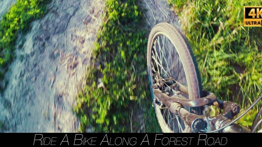 Thumbnail for Ride A Bike Along A Forest Road