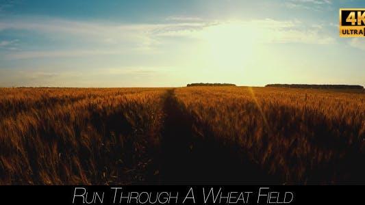 Thumbnail for Run Through A Wheat Field.mov 3