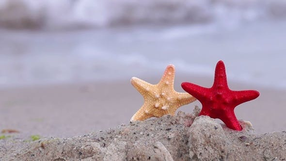 Thumbnail for Starfish on the Beach
