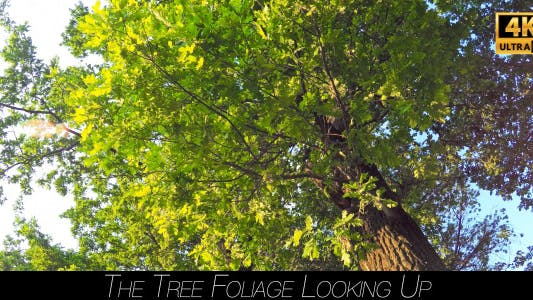 Cover Image for The Tree Foliage Looking Up 5