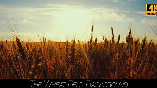 Thumbnail for The Wheat Field 2