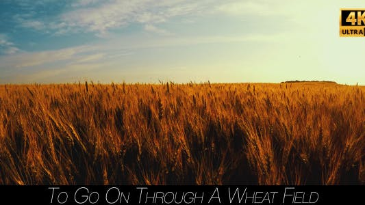 Cover Image for To Go On Through A Wheat Field 2