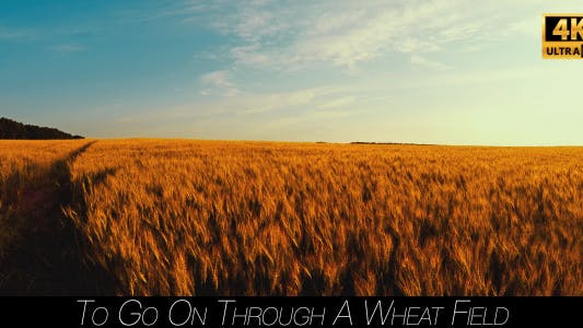 Thumbnail for To Go On Through A Wheat Field 3
