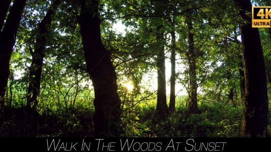 Thumbnail for Walk In The Woods At Sunset 4