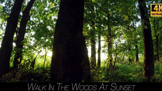 Cover Image for Walk In The Woods At Sunset 6