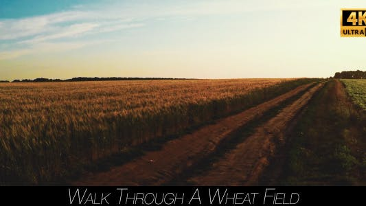 Cover Image for Walk Through A Wheat Field