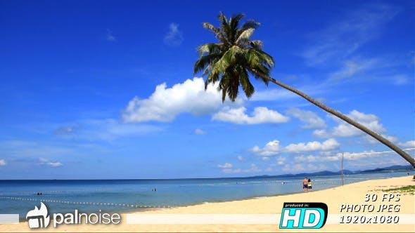 Thumbnail for Paradise Beach Palm