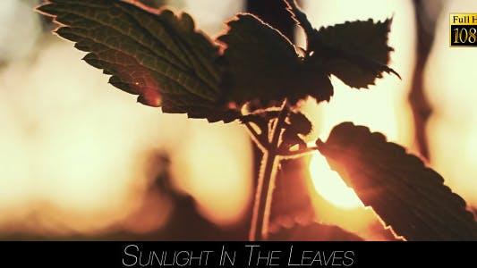 Thumbnail for Sunlight In The Leaves 60