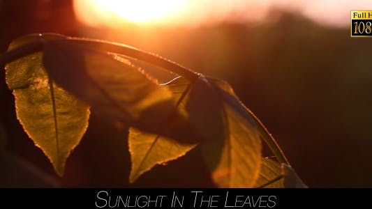 Thumbnail for Sunlight In The Leaves 63