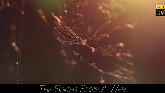Thumbnail for The Spider Spins A Web 5