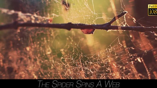 Thumbnail for The Spider Spins A Web 6