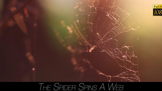 Thumbnail for The Spider Spins A Web 7