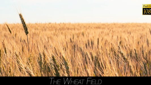 Thumbnail for The Wheat Field 3
