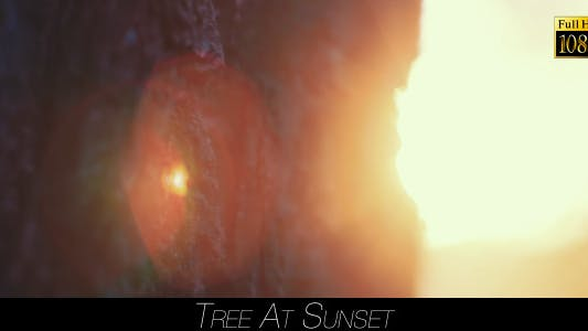Thumbnail for Tree At Sunset