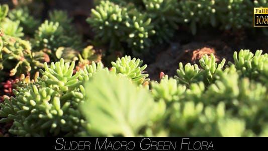 Thumbnail for Green Flora