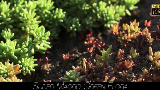 Thumbnail for Green Flora 2