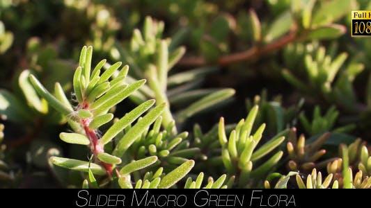 Thumbnail for Green Flora 3