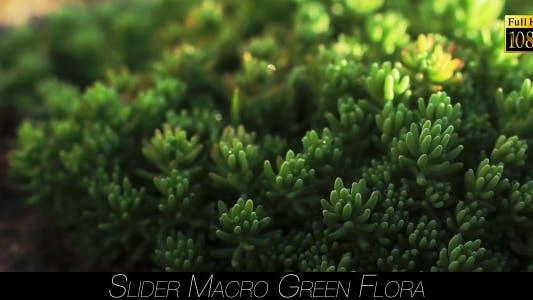 Thumbnail for Green Flora 4
