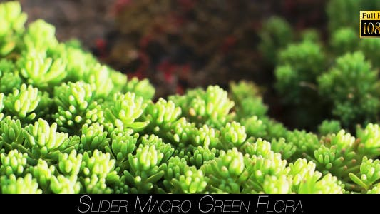 Thumbnail for Green Flora 6
