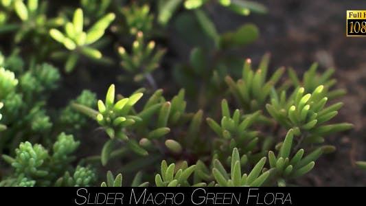 Thumbnail for Green Flora 8
