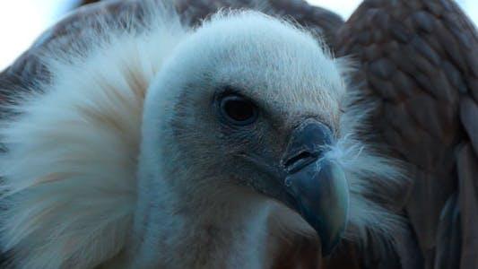 Thumbnail for Eagle Bird