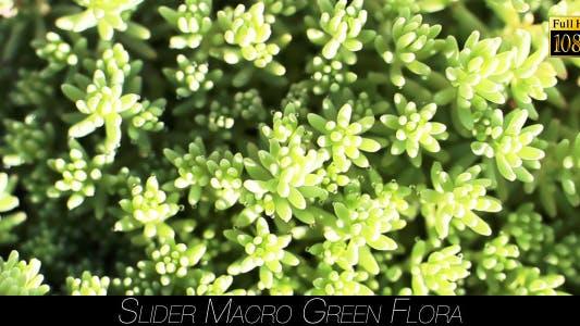 Thumbnail for Green Flora 10