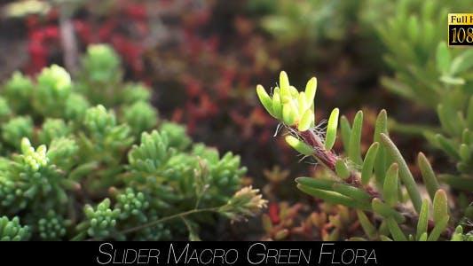 Thumbnail for Green Flora 11