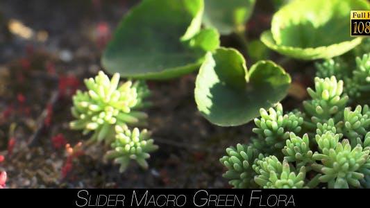 Thumbnail for Green Flora 12