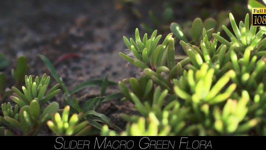 Thumbnail for Green Flora 13