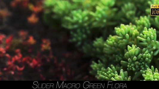 Thumbnail for Green Flora 18