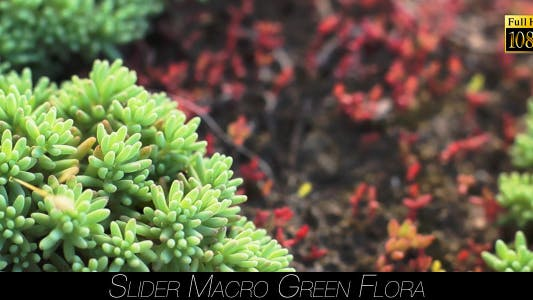 Thumbnail for Green Flora 19