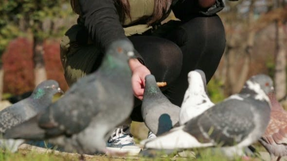Thumbnail for Young Girl Squatting And Feeding Pigeons With
