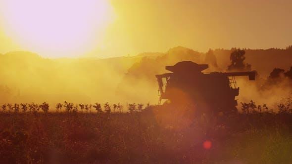 Thumbnail for Kombinieren Sie Traktor in der Feldernte bei Sonnenuntergang