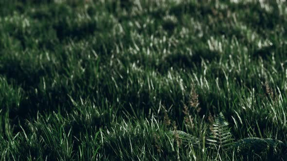 Soft Defocused Spring Background with a Lush Green Grass