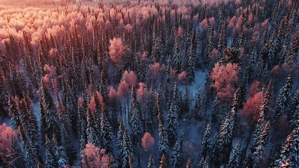 Thumbnail for Flying Over a Snowy Winter Forest at Dawn in Stunning Light