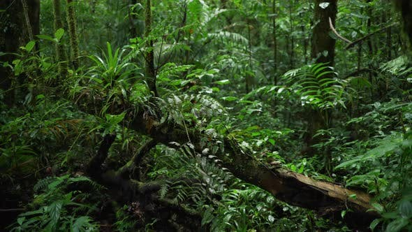 Thumbnail for Defocused shot of lush ferns and plants growing on the trunk of fallen tree