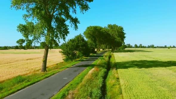 Road among trees.