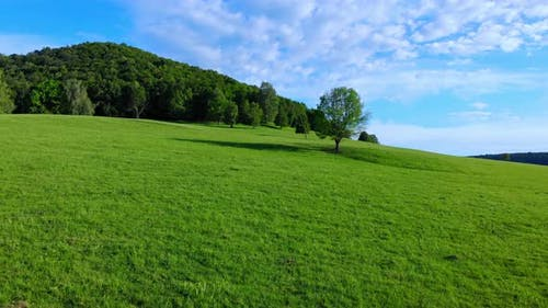 Green plain and blue sky