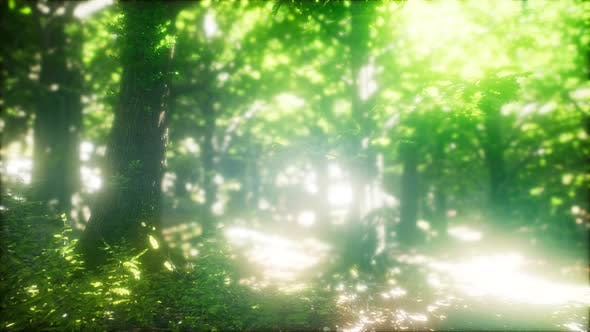 Thumbnail for Sun Light in the Green Forest
